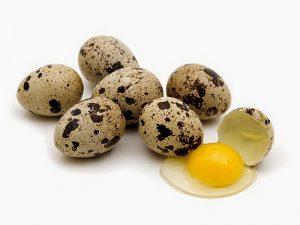 uputstvo za upotrebu jaja japanske prepelice
